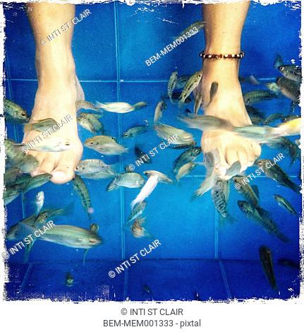 Caucasian woman's feet being picked at by tiny fish