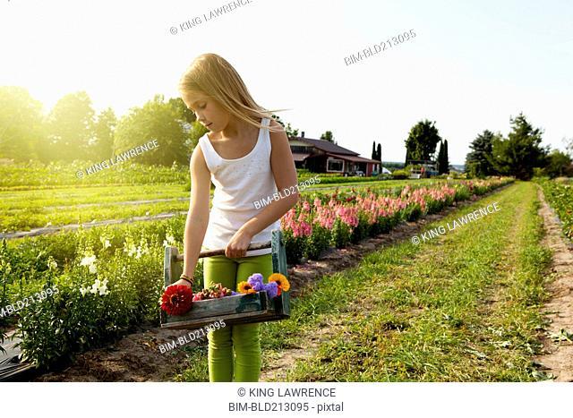 Caucasian girl picking flowers on farm