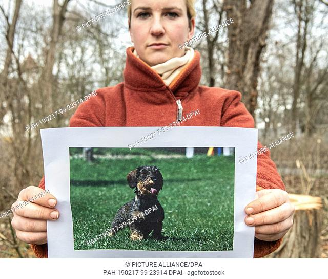 "07 February 2019, Berlin: Maxi Schwebig, daughter of the dog owner, holds a picture with the missing dachshund """"Schnipsel"""" in the camera"