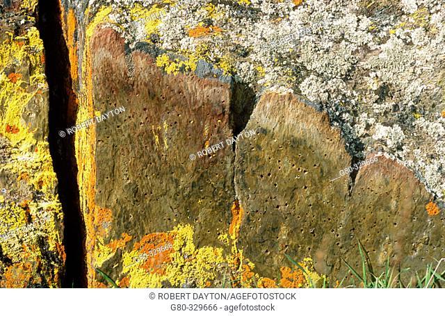 Lichen. Merced falls. California. USA