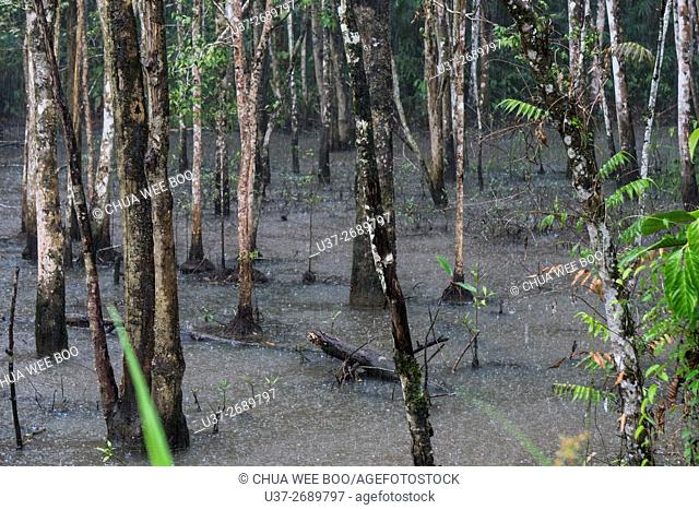 Trees. Image taken at Kampong Gumkbang, Bau, Sarawak, Malaysia