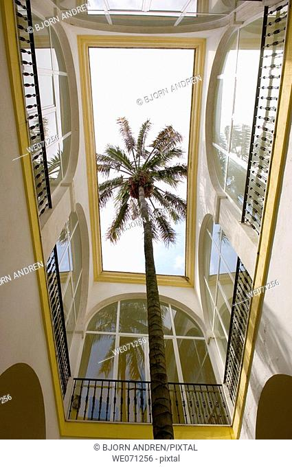 Palm tree inside court at the cultural center in Vejer de la Frontera. Costa de la Luz, Andalucia. Spain