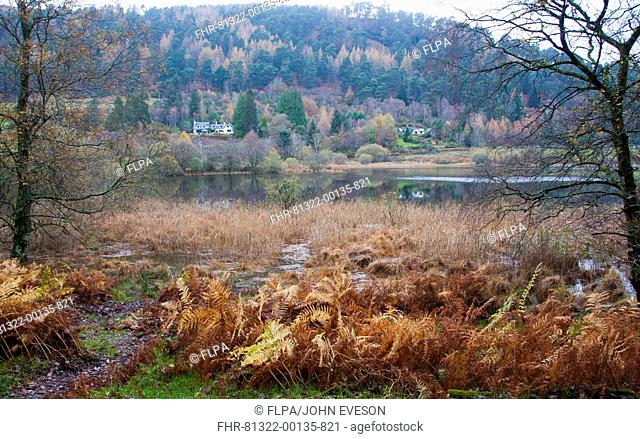 View of lake habitat, Lower Lake, Wicklow Way Walking Route, Glendalough Valley, Wicklow Mountains N P , County Wicklow, Ireland, november