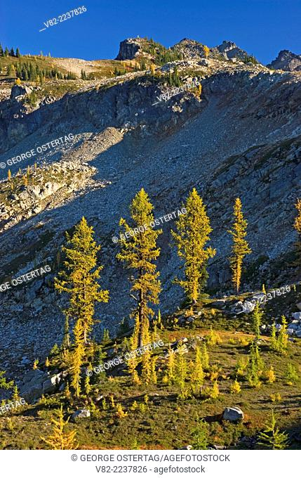 Larch near Maple Pass, Okanogan National Forest, Washington