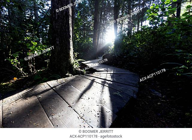 Low angled light highlights a boardwalk in the forest near Cox Bay near Tofino, Pacific Rim, Vancouver Island, British Columbia, Canada