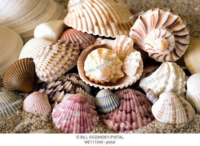 Seashells - Florida, USA