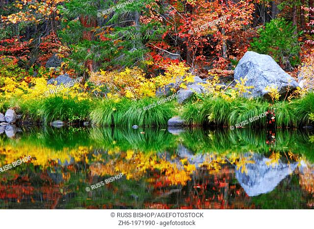 Fall color and grasses along the Merced River, Yosemite Valley, Yosemite National Park, California USA