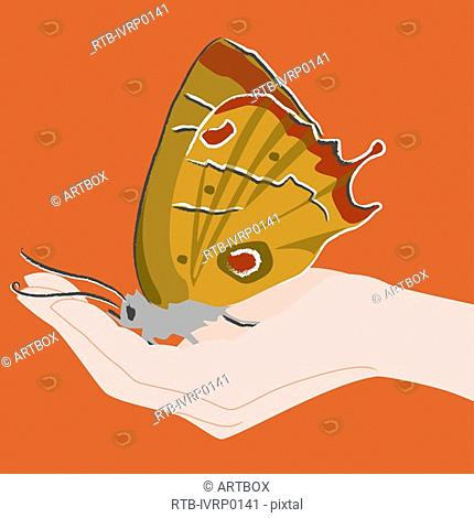 Butterfly on a person's hand