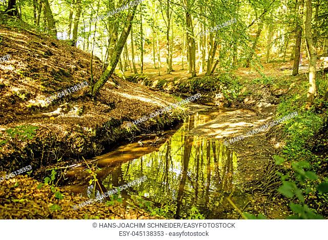 forest with river Orzechowa, Poland, Baltic sea