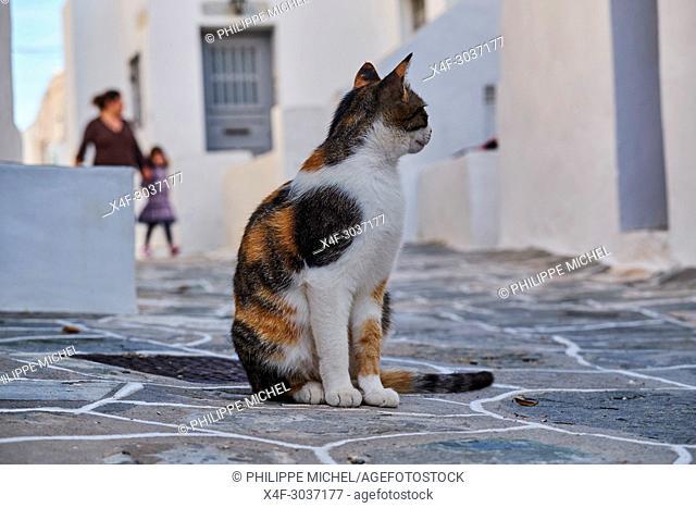 Greece, Cyclades, street cat