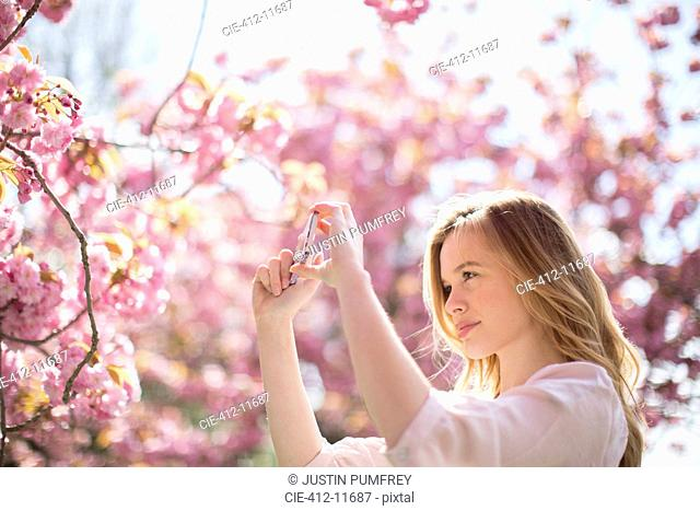 Woman photographing pink blossoms on tree