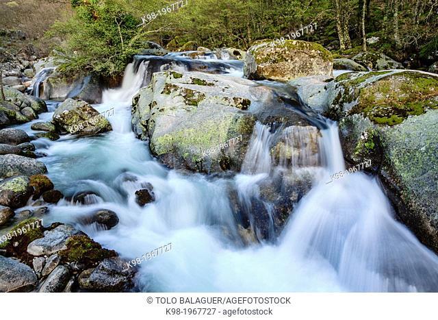 deciduous forest, Nature Reserve Garganta de los Infiernos -Gorge of Hell-, saw Tormantos, Jerte Valley, Caceres, Extremadura, Spain, europe