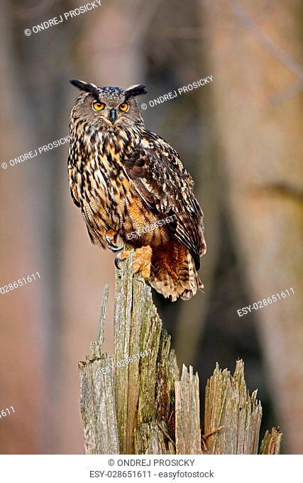 Eagle Owl, big bird rare sitting on the stump in dark forest