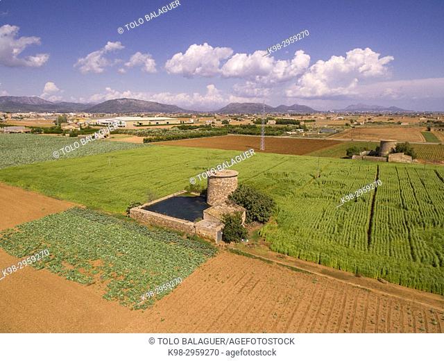 Farmland, Potato production, Sa Pobla, Mallorca, Balearic islands, Spain