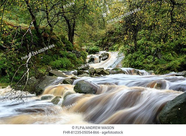 View of river cascades in decidous woodland habitat, Black Clough, Peak District N.P., Derbyshire, England, October