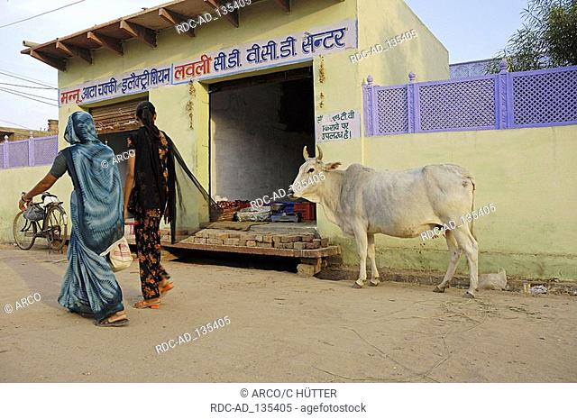 Cattle and women in front of shop Bharatpur Rajasthan India Holy Cow
