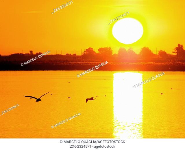 Sunrise over Encanyissada Lagoon. Ebro River Delta Natural Park, Tarragona province, Catalonia, Spain