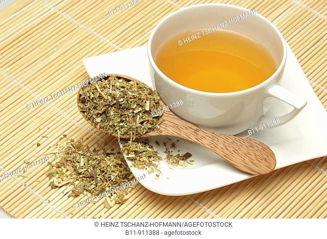 Kräutertee aus der Heilpflanze Goldrute, kanadische, Solidago canadensis / herbtea made of te medicinal plant golden rod, solidago canadensis