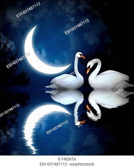 Swans By Moonlight >> Moonlight Swan Stock Photos And Images Age Fotostock