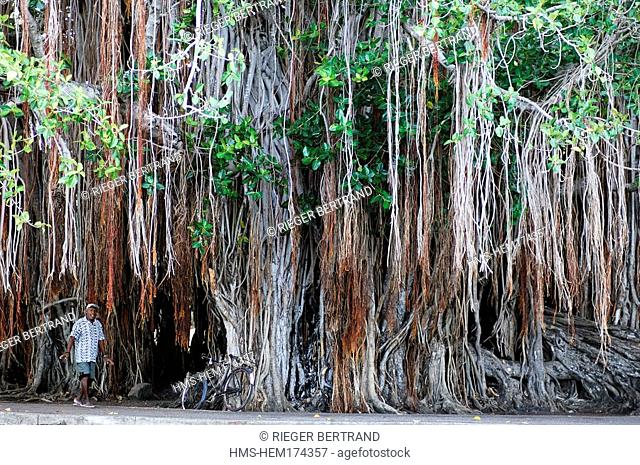 Mauritius Island, West Region, Banyan Tree at Grande Case Noyale