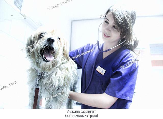 Vet using stethoscope on dog