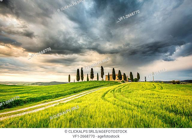Val d'Orcia, Tuscany, Italy. A lonely farmhouse with cypress trees standing in line in foreground