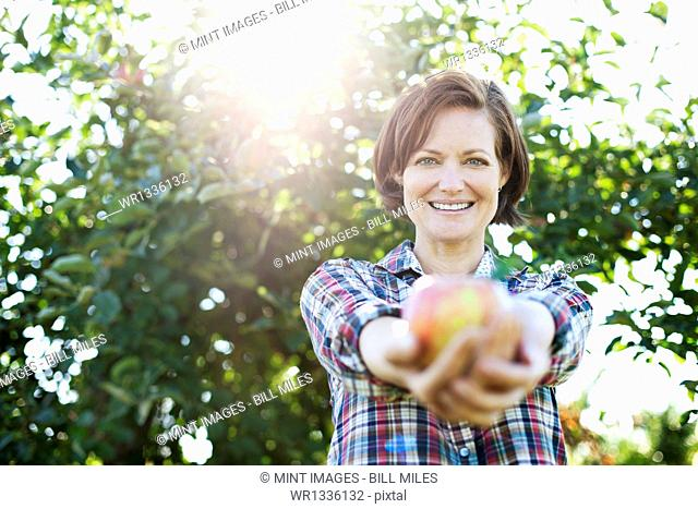 A woman in a plaid shirt holding a freshly picked apple in her two hands, in the orchard at an organic fruit farm