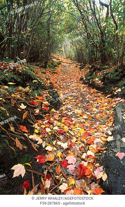 Alum Cave Trail to Mount LeConte. Great Smoky Mountains National Park. Tennessee. USA