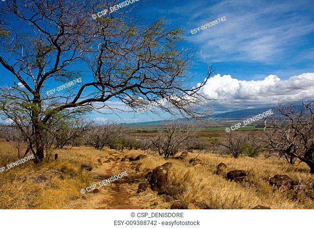 A trail under the hot Hawaiian sun