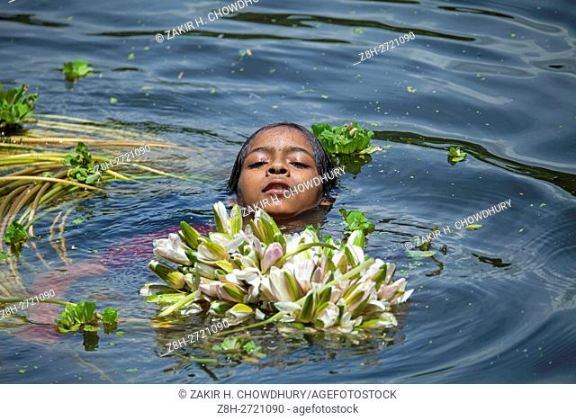 Water Lily Is The National Flower Of Bangladesh It Also An