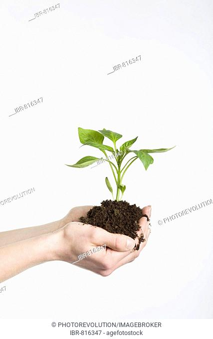 Woman's hands cupping a young plant rooted in soil in her hands