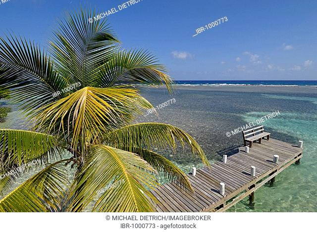 Palm trees on a bathing jetty on the South Water Caye, Caribbean atoll, Caribbean Sea, Belize, Central America