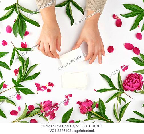 two female hands holding empty white paper cards and burgundy flowering peonies with green leaves, top view, concept of anti-aging procedures for rejuvenating...