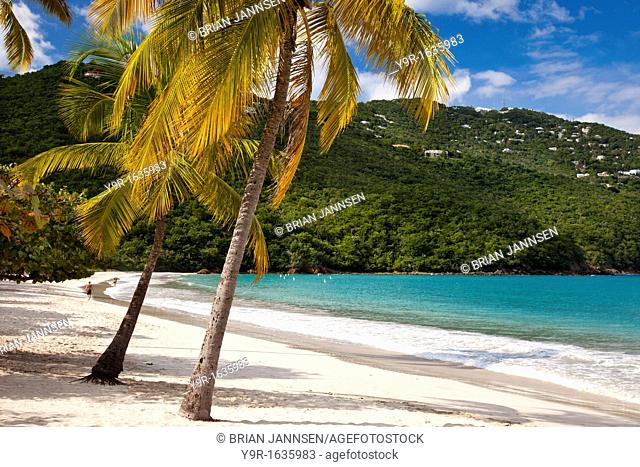 Palm trees and white sandy beach at Megan's Bay on St  Thomas, US Virgin Islands