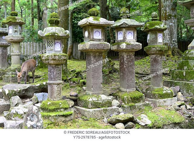 Stone lantern at Kasuga Taisha in Nara, Japan, Asia