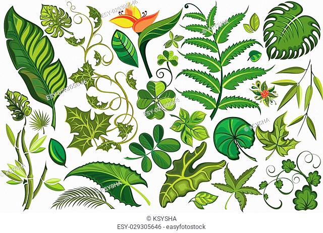 Vector green leaves