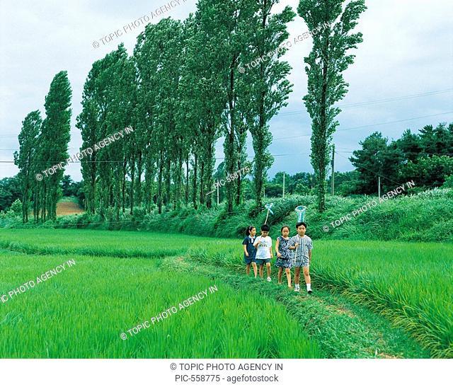 Rice Field,Chungnam,Korea