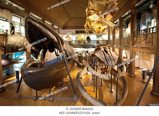 Natural history museum, interior