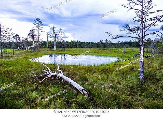 The Viru Bog in Lahemaa National Park, Estonia