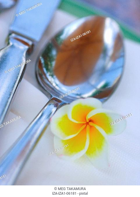 Close-up of a table knife and spoon with a flower Plumeria