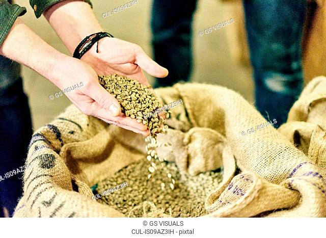 Hands of male coffee shop owner checking raw coffee beans in store room