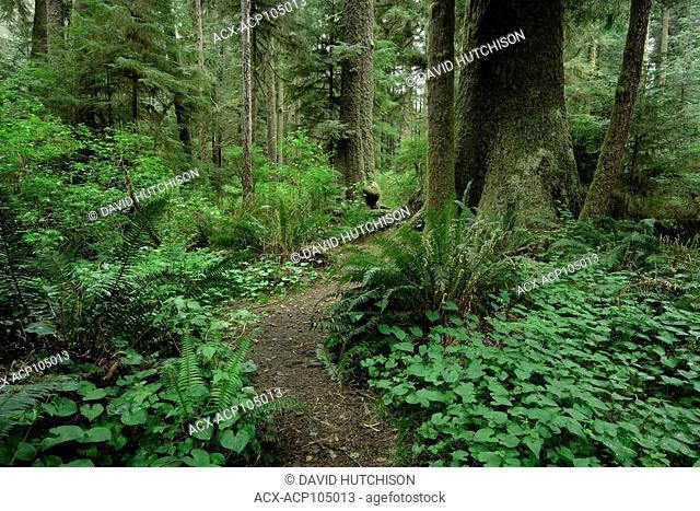 Carmanah Walbran Provincial Park, Vancouver Island, BC Canada
