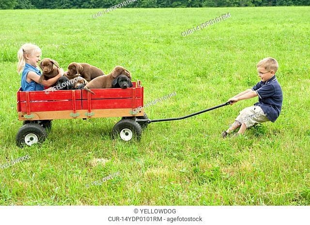 young siblings playing in a field with their 8 week old labrador retriever puppies
