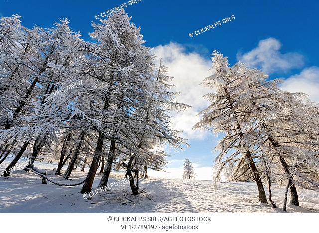 Orsiera Rocciavre Park, Chisone Valley, Turin,Piedmont, Italy. Winter Orsiera Rocciavre Park