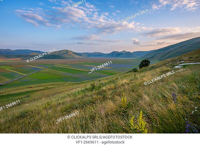 Blooming in Piano Grande of Castelluccio di Norcia, Monti Sibillini NP, Umbria, Italy