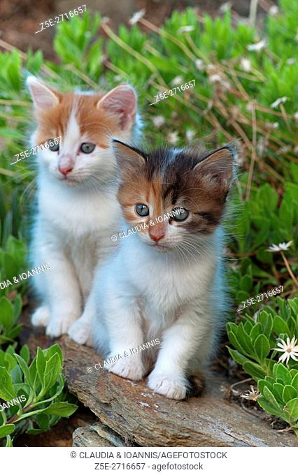 Two kittens sitting on a wall in the garden