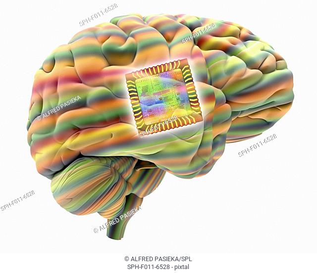 Artificial intelligence and cybernetics, conceptual image. This image of a computer chip, superimposed on a human brain, could represent concepts such as...