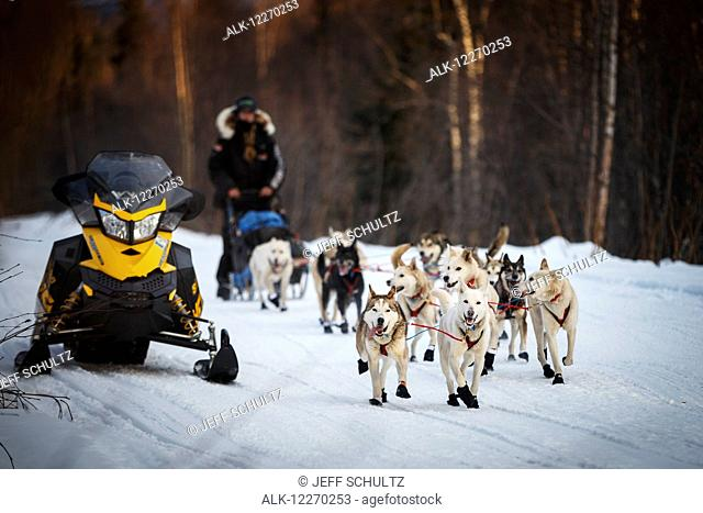 Kristy Berington on the road from Takotna to Ophir during the Iditarod Sled Dog Race 2014