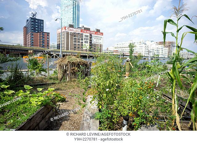 The Smiling Hogshead Ranch, an urban farm in Long Island City in Queens in New York.The small community farm which has been squatting on a disused Metropolitan...