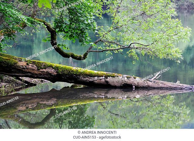 Montenegro - Biogradska Gora Nacional Park - Il lago, al centro del parco